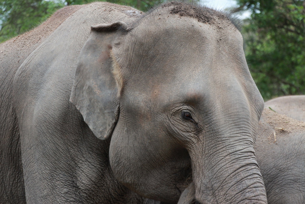 Pueblo Jewelry - Chiang Mai Elephant Sanctuary- Travel Journal