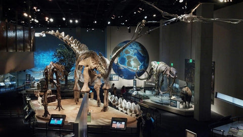 Houston Museum Of Natural Science General Admission Price