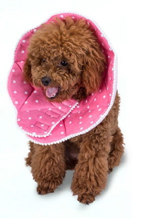 Padded Protection Collar Japanese Assorted Styles: Kiwi / Sunflower / Crab / Pink / Yellow Spots