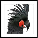 Exotic Bird 1 / Small Exotic Bird Giclee Print Artwork only at Complete Pad | furniture store Australia  - 1
