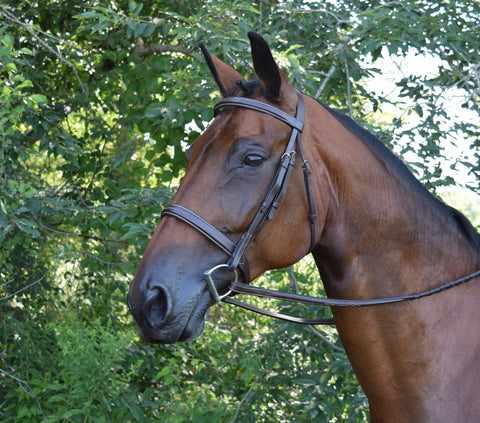 Black Oak SPRUCE Fancy Stitched Square Raised Hunter Bridle with Reins