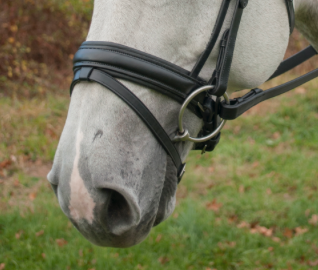 "Red Barn PASSAGE 1 5/8"" Round Raised Padded Flash Noseband"