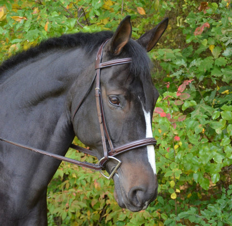 Black Oak CYPRUS Padded Fancy Stitched Round Raised Hunter Bridle with Reins