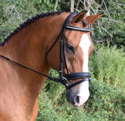 Black Oak LARKSPUR Padded Round Raised Crystal Dressage Bridle with Reins
