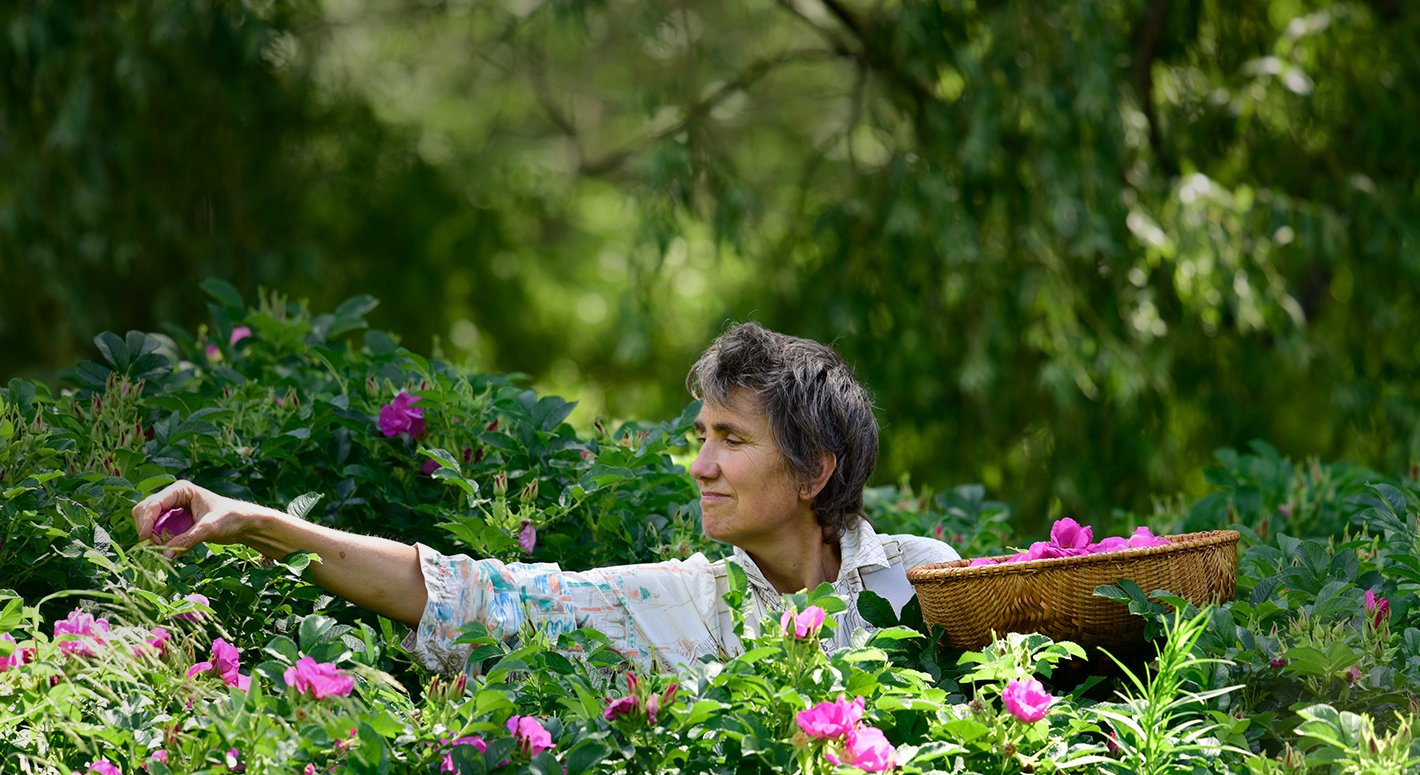 Healing Begins in the Garden - Meet Founder & Herbalist Deb Soule