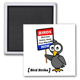 Bird Strike Magnet