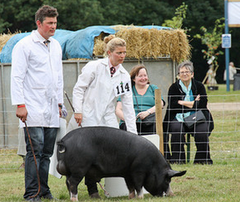 Devon farmers markets and country shows in 2016