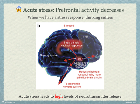 Acute stress responses decreases higher thinking abilities
