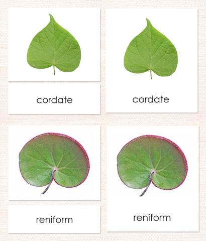 Cardstock Leaf Shapes (Botany Cabinet) 3-Part Reading