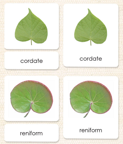 Leaf Shapes (Botany Cabinet) 3-Part Reading - Maitri Learning