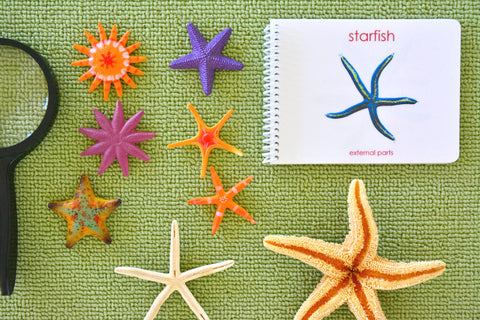 """Parts of"" the Sea Star Book - Maitri Learning  - 1"