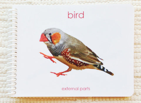 "Imperfect ""Parts of"" the Bird Book - Maitri Learning"