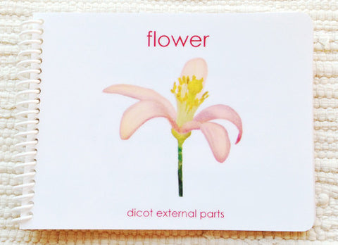 """Parts of"" the Flower (Dicot) Book - Maitri Learning"