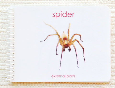 "Imperfect ""Parts of"" the Spider Book - Maitri Learning"