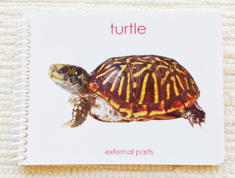 "Imperfect ""Parts of"" the Turtle Book - Maitri Learning"