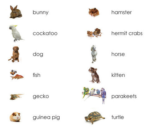 pets montessori vocabulary cards maitri learning