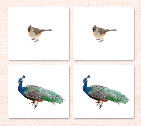 Imperfect Birds Matching - Maitri Learning
