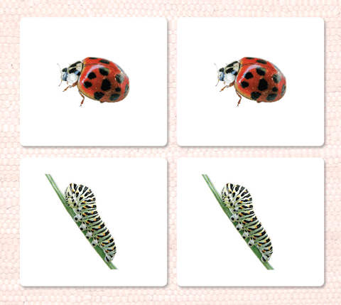 Insects Matching - Maitri Learning