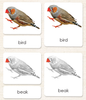 """Parts of"" the Bird <p>3-Part Reading - Maitri Learning"