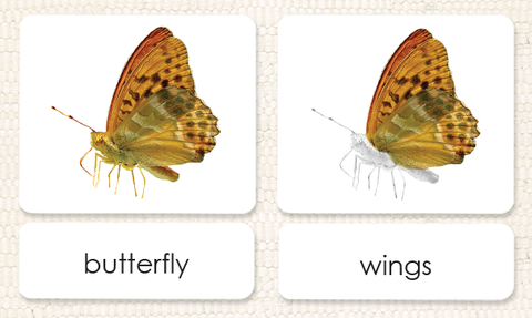 """Parts of"" the Butterfly<p>3-Part Reading"
