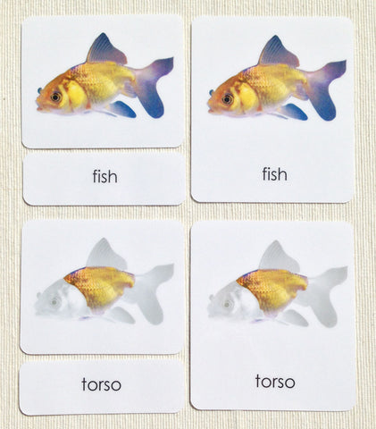 """Parts of"" the Fish <p>3-Part Reading - Maitri Learning"