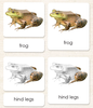 "Vertebrates ""Parts of"" 3-Part Set - Maitri Learning"