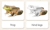 """Parts of"" the Frog <p>3-Part Reading - Maitri Learning"