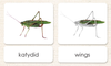 """Parts of"" the Katydid<p>3-Part Reading"
