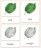 "Imperfect ""Parts of"" the Leaf 3-Part Reading - Maitri Learning"