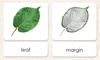 """Parts of"" the Leaf<p>3-Part Reading - Maitri Learning"
