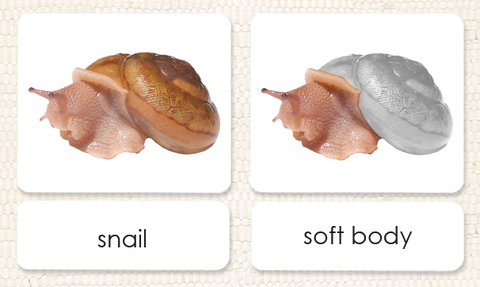 """Parts of"" the Snail<p>3-Part Reading - Maitri Learning"