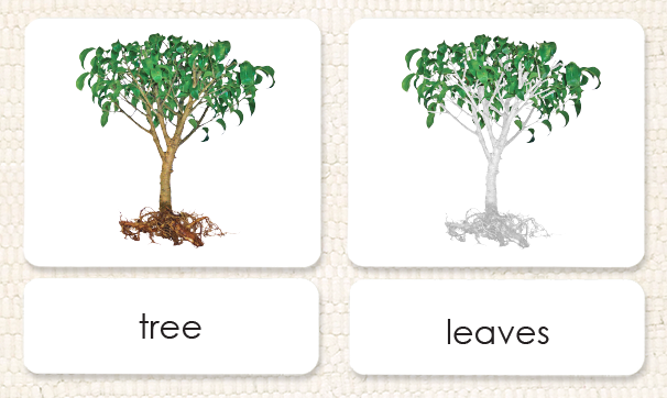 parts of the tree3 part reading maitri learning