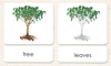 """Parts of"" the Tree<p>3-Part Reading - Maitri Learning"