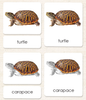 """Parts of"" the Turtle <p>3-Part Reading - Maitri Learning"