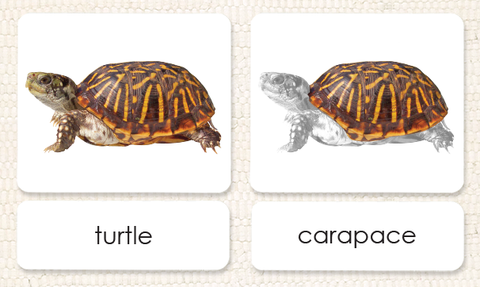 """Parts of"" the Turtle <p>3-Part Reading"