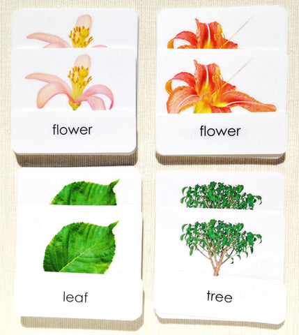 "Botany ""Parts of"" 3-Part Set - Maitri Learning"