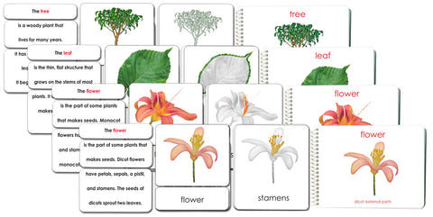 "Botany ""Parts of"" Book & Card Set/4 - Maitri Learning"