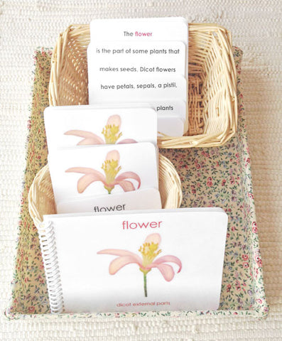"""Parts of"" the Flower (Dicot) Book & Card Set - Maitri Learning  - 1"