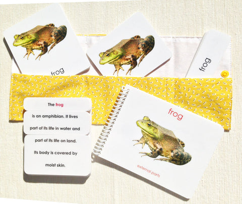 """Parts of"" the Frog Book & Card Set - Maitri Learning  - 1"