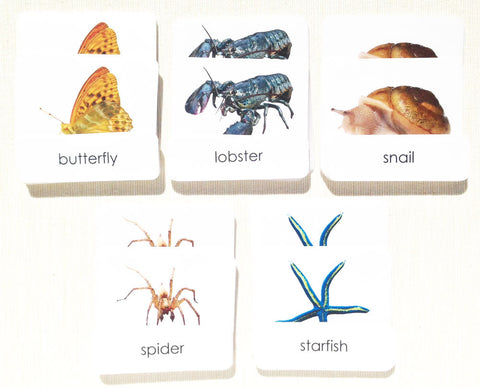 "Invertebrates ""Parts of"" 3-Part Set - Maitri Learning"