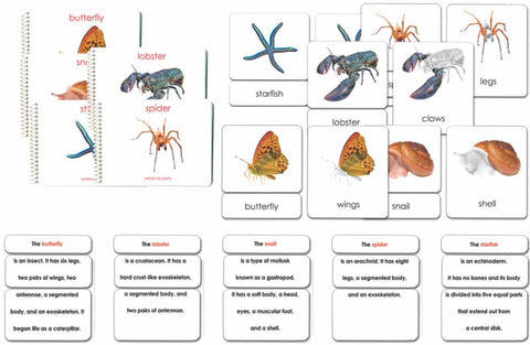 "Invertebrates ""Parts of"" Book & Card Set/5 - Maitri Learning"