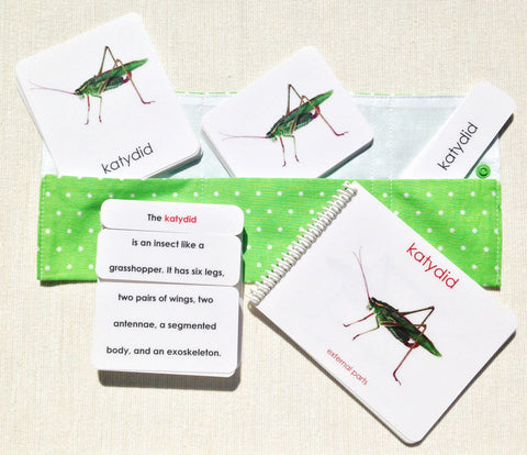 """Parts of"" the Katydid Book & Card Set - Maitri Learning"