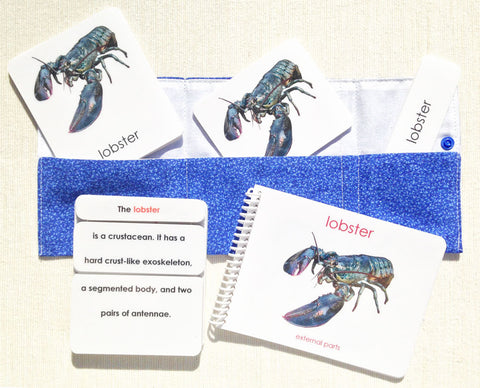 """Parts of"" the Lobster Book & Card Set - Maitri Learning"