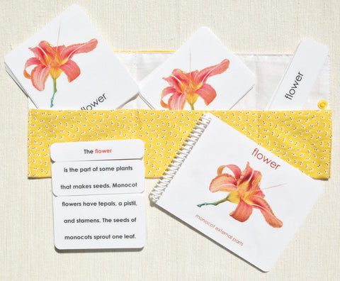 """Parts of"" the Flower (Monocot) Book & Card Set - Maitri Learning"