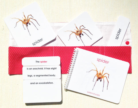 """Parts of"" the Spider Book & Card Set - Maitri Learning  - 1"