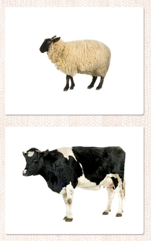 Farm Animal Toddler Cards - Maitri Learning