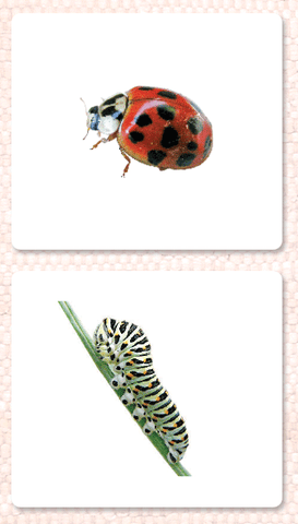 Insects Vocabulary - Maitri Learning
