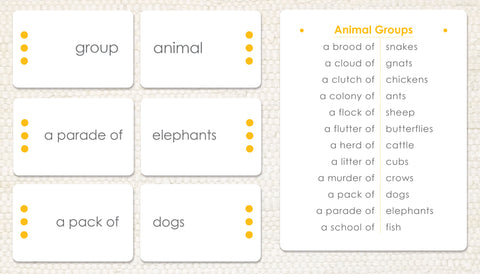 Animal Groups: Word Study - Maitri Learning