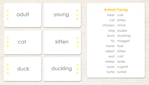 Animals and Their Young - Maitri Learning