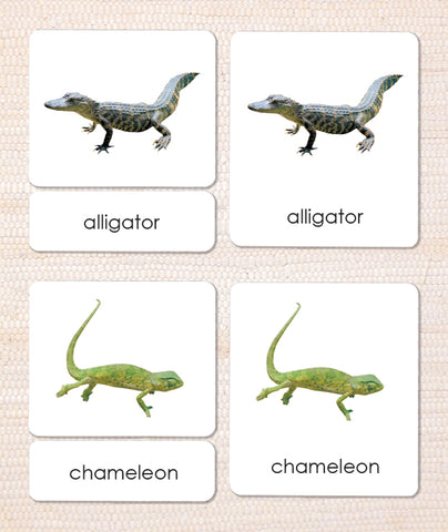 Reptiles 3-Part Reading - Maitri Learning